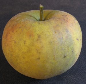 Cottenham seedling Apple
