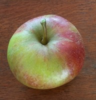 Bess Pool Apple