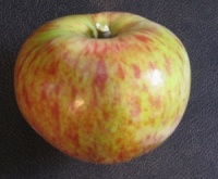 Crawley Beauty Apple